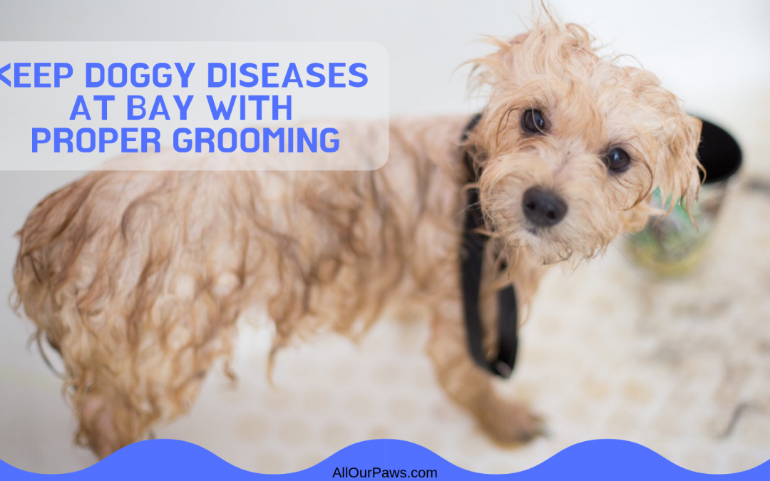 Keep Doggy Diseases at Bay with Proper Grooming