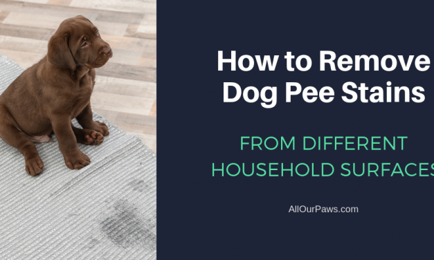 How to Remove Dog Pee Stains from Different Household Surfaces