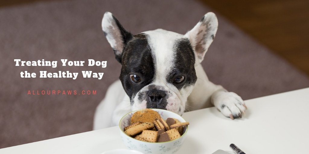 Treating Your Dog The Healthy Way