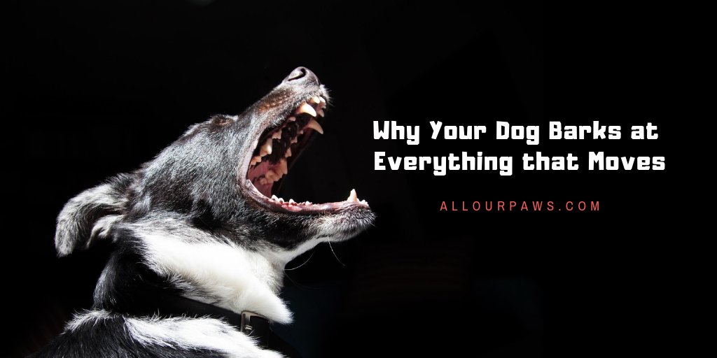 Why Your Dog Barks at Everything that Moves