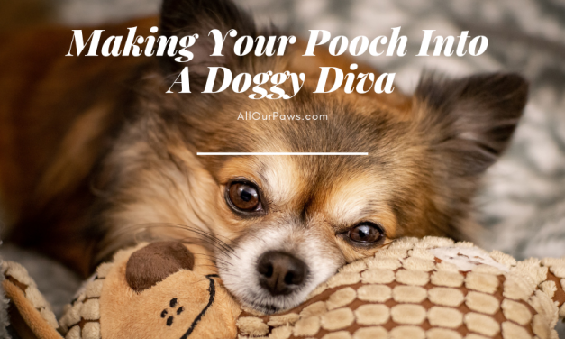 Making Your Pooch Into A Doggy Diva