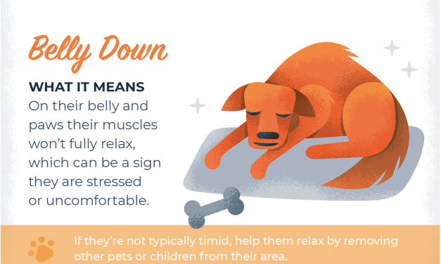 What Your Pet's Sleeping Position Means