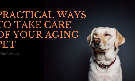 Practical Ways to Take Care of Your Aging Pet