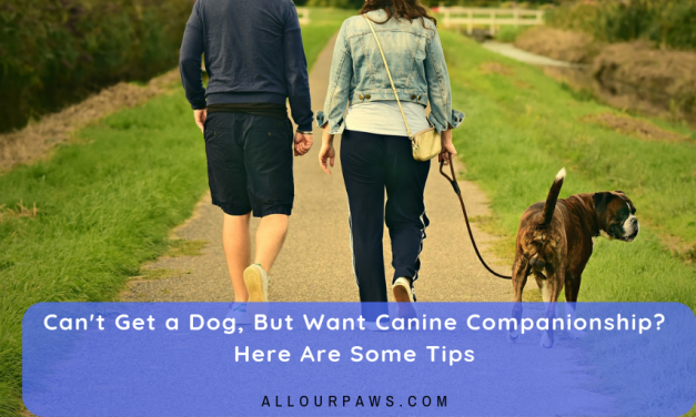Can't Get a Dog, But Want Canine Companionship?