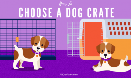 Choosing a Crate for Your Dog