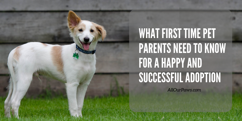 What First Time Pet Parents Need to Know for a Happy and Successful Adoption