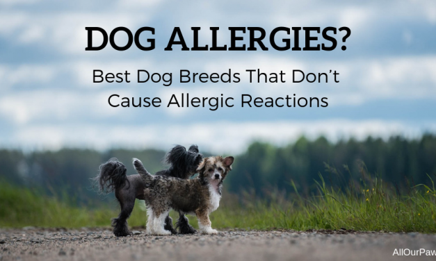The Best Dog Breeds That Don't Cause Allergic Reactions