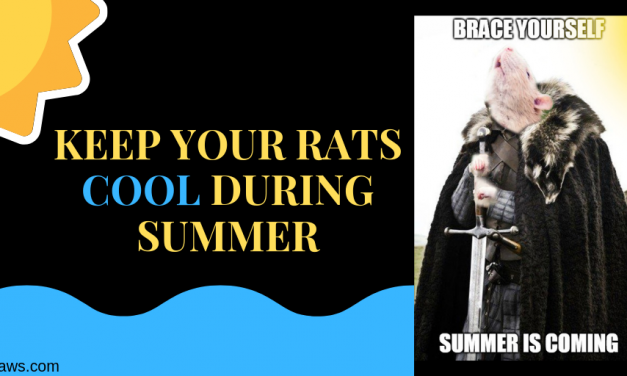 Keep Your Rats Cool During Summer