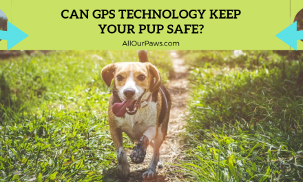 Can GPS Technology Keep Your Pup Safe?