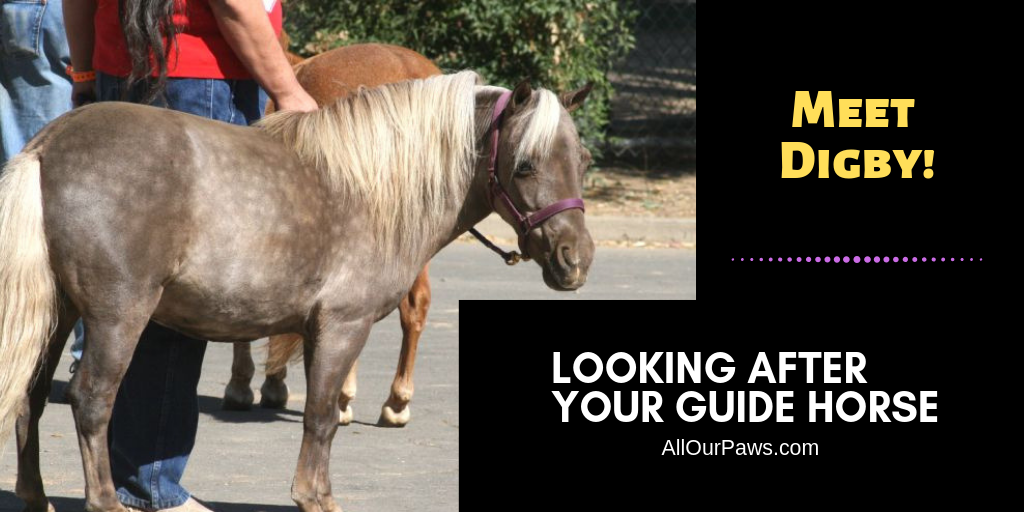 Looking After Your Guide Horse – Yes, Horse!