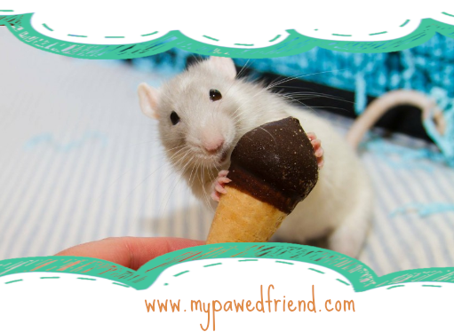 Summer Treats for Pet Rats