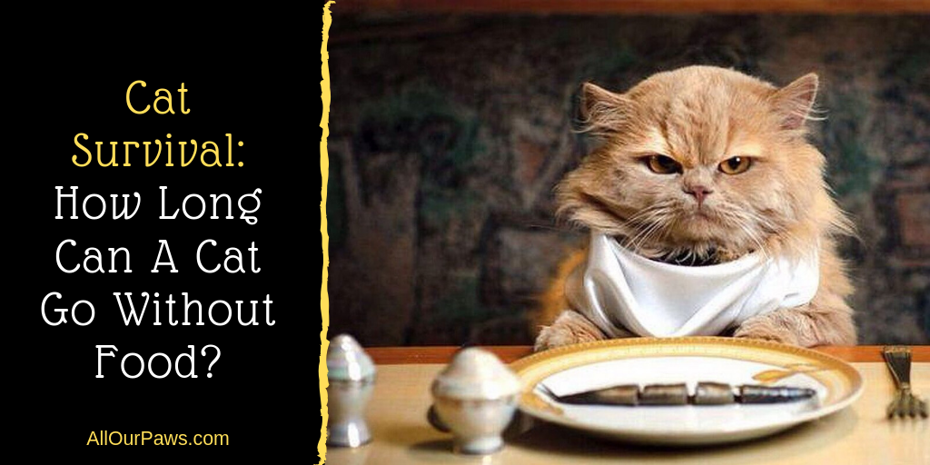 Cat Survival: How Long Can A Cat Go Without Food?