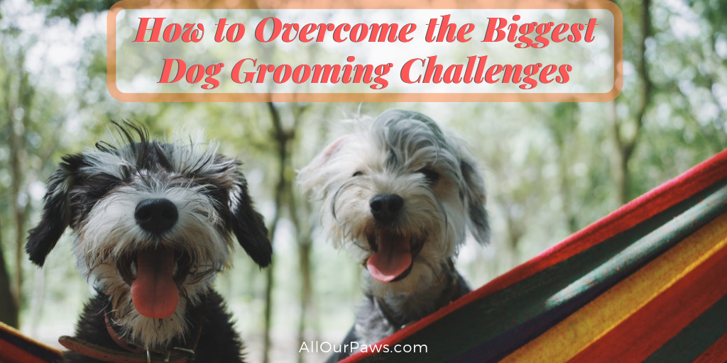 How to Overcome the Biggest Dog Grooming Challenges