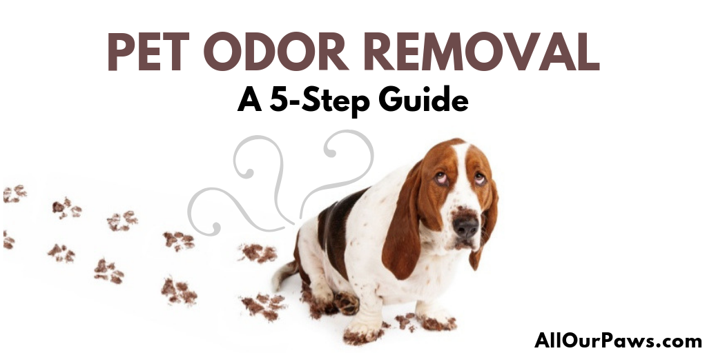 Ooops! Dog Odor in the Carpet?