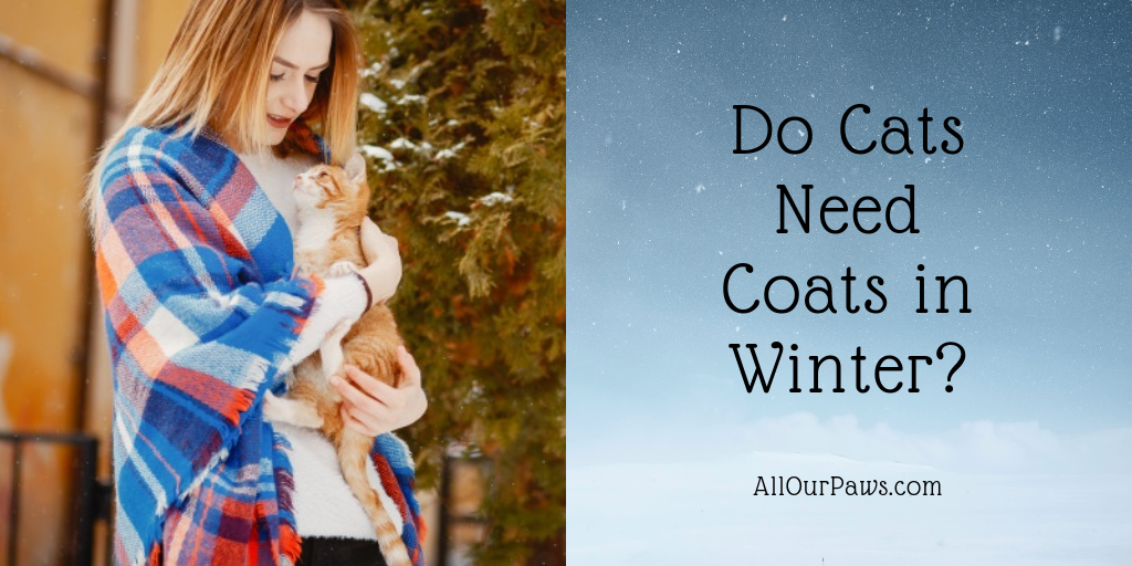 Do Cats Need Coats in Winter?