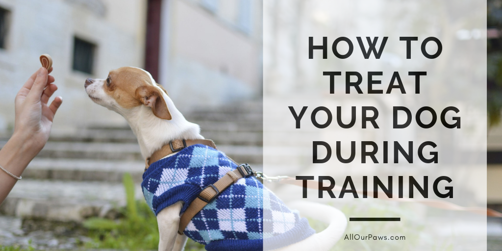 How to Treat Your Dog During Training