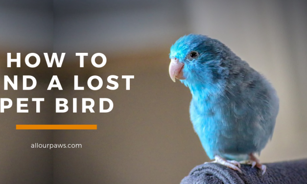 How to Find a Lost Bird