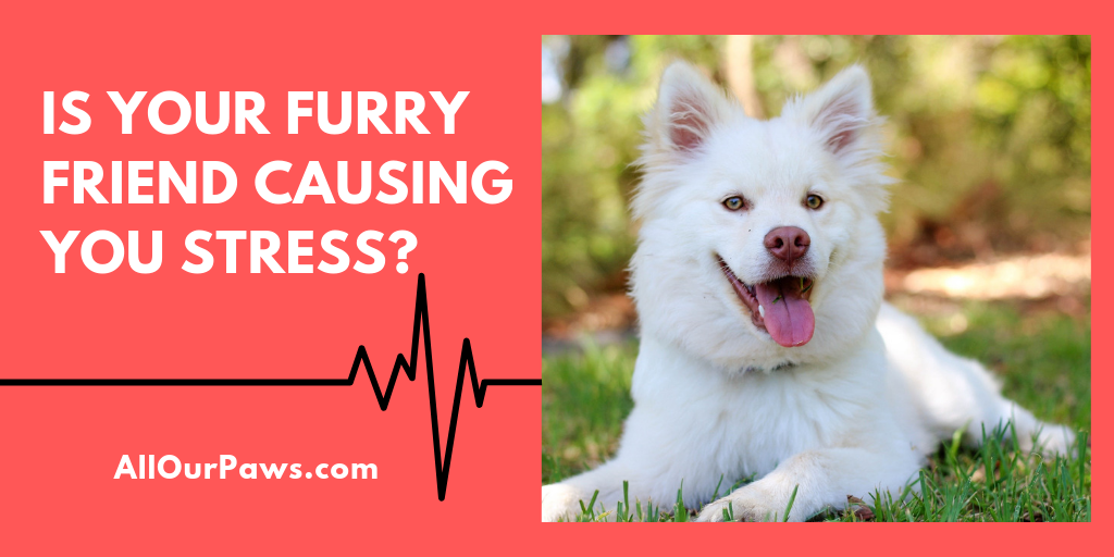 Is Your Furry Friend Causing You Stress?