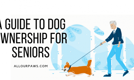 A Guide to Dog Ownership for Seniors