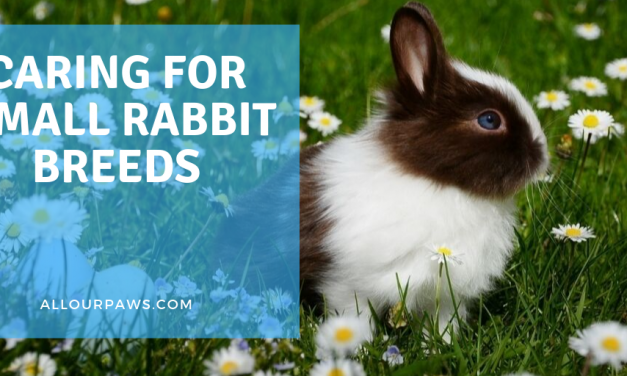 Caring for Small Rabbit Breeds