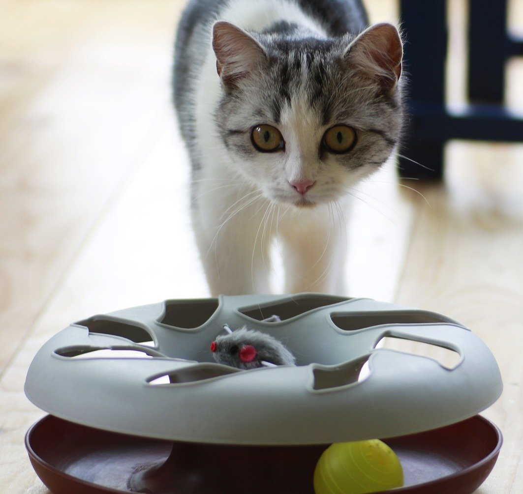 Cat playing with a puzzle toy