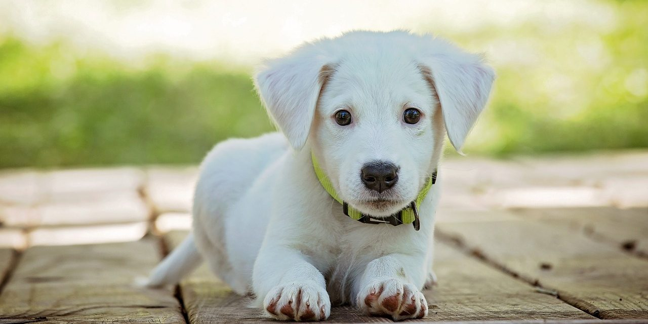 Keeping Your Pet in Tip Top Health