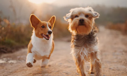 Pet-Friendly Ways to Rid Your Home of Bugs