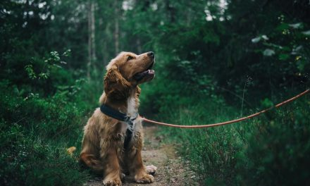 Four Signs That Mean You're Ready For A Dog
