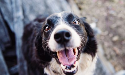 Tips for Keeping Your Dog's Teeth Healthy