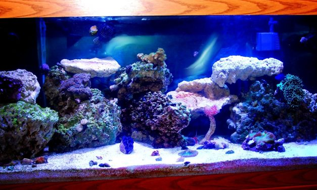 Factors to Keep in Mind When Choosing an Aquarium for Your Fish