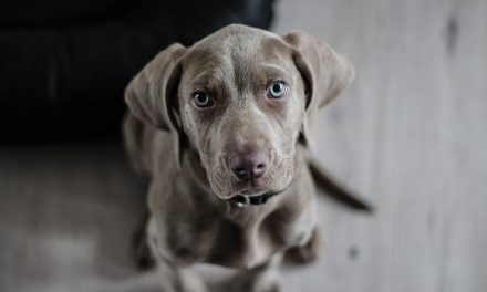 A Puppy Is For Life, So Here's What To Think About When Adding A Pooch to Your Family