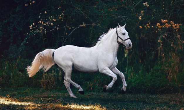 Starting & Operating Your Own Equestrian Club