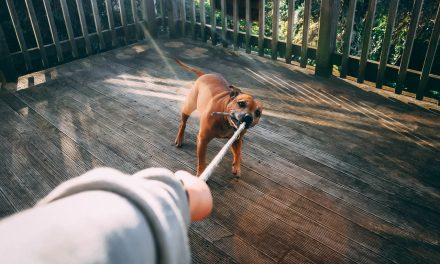 Enriching Your Dogs Life: The Four T's