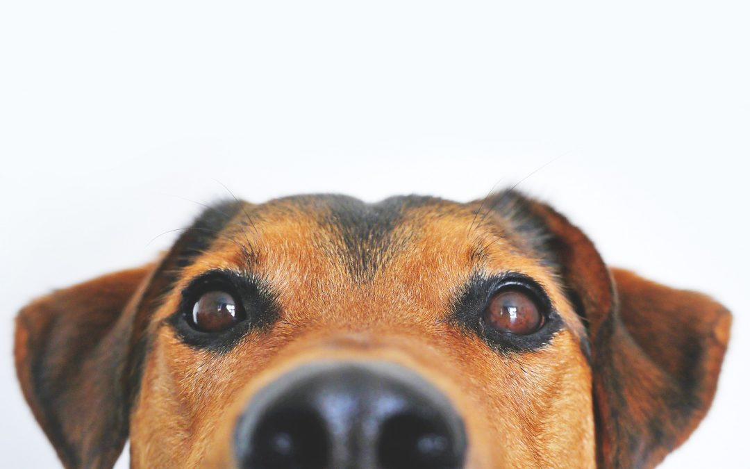 10 Common Dog Breeds And Their Health Issues