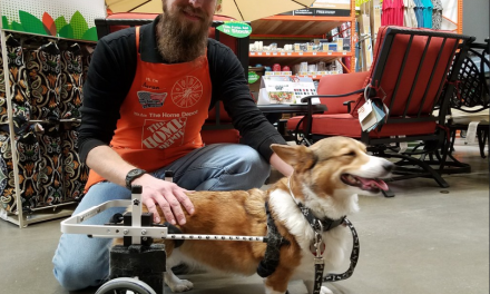 Dog Wheelchair or Handheld Sling: Which Is Right for Your Dog?