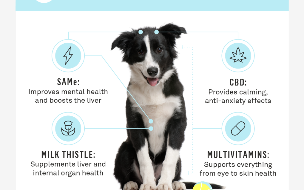 Dog Supplements for General Wellness