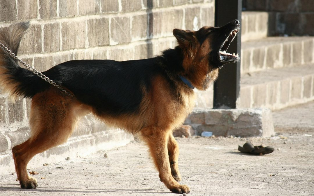 How to Stop Aggressive Behaviors in Dogs