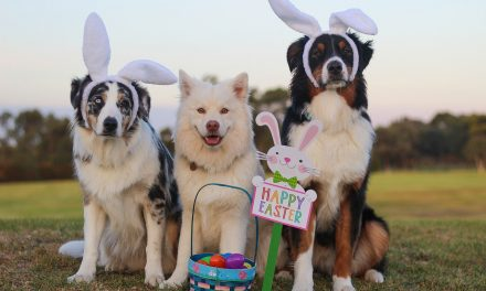 Dangerous Easter Toxins for Pets
