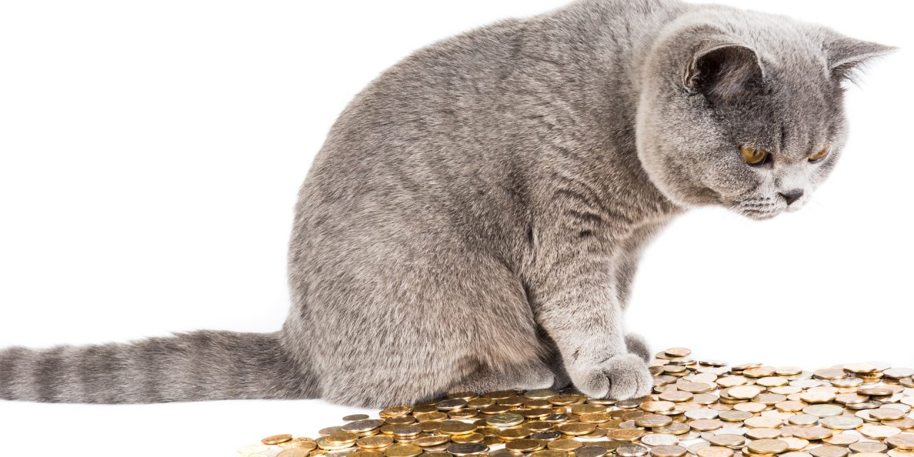Are You Financially Ready to Adopt a Pet?