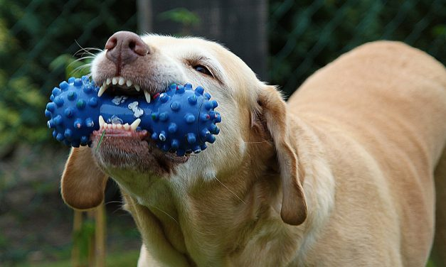 Top 5 Kinds of Chew Toys Your Best Friend Will Love