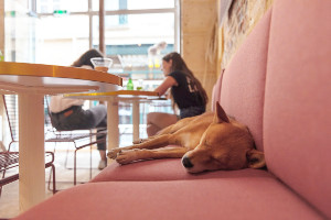 Dog sleeping in a cafe