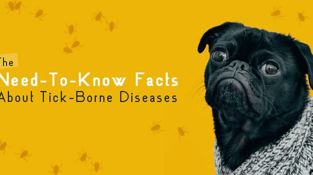 The Need-To-Know Facts About Tick-Borne Diseases