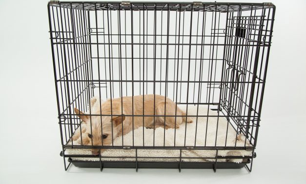 Best and Most Comfortable Crates for Your Dog
