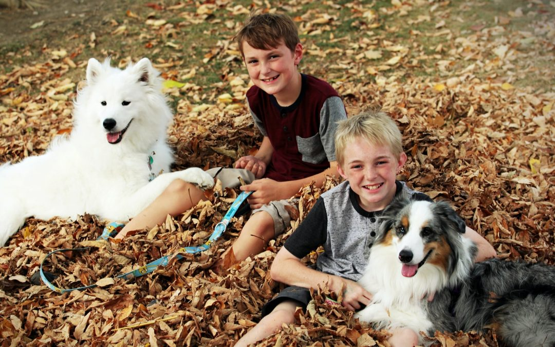 How to Teach Kids to be Responsible Dog Owners