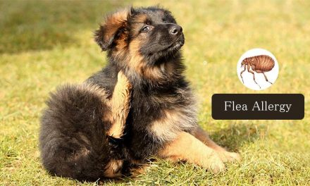 3 Immediate Steps to Take When Your Pet Has Flea Allergy