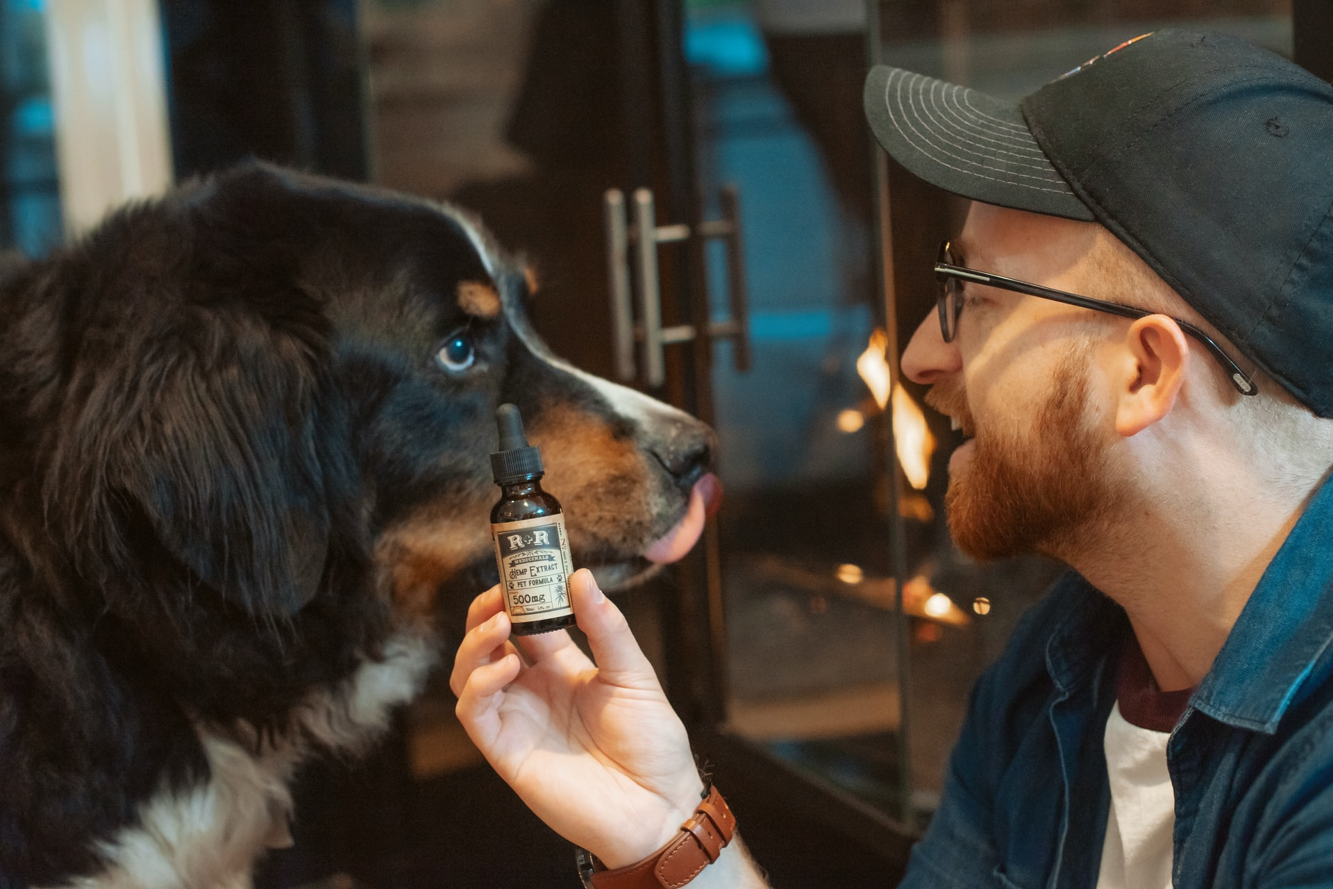 Owner giving his dog CBD drops