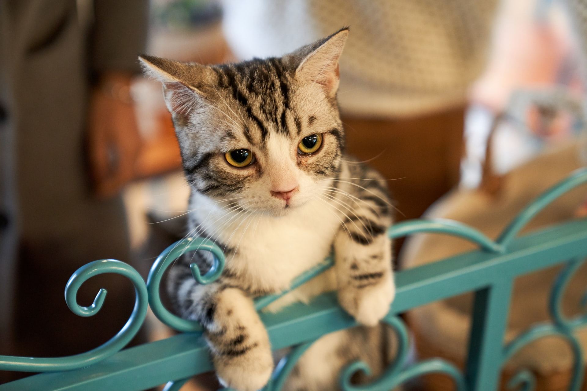 8 Tips to Help your Cat Overcome the Feeling of Hyper-Attachment