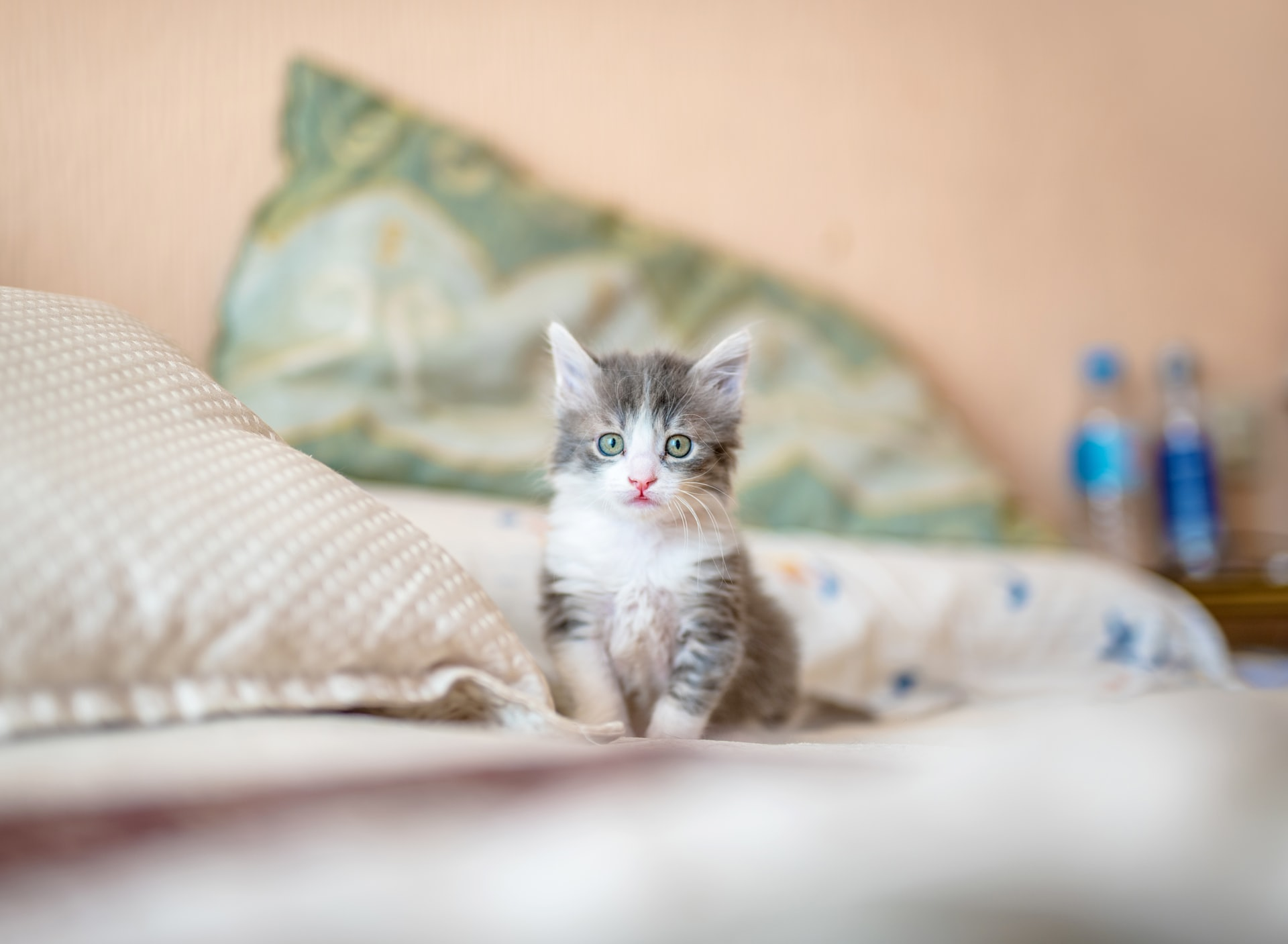 Kitten sitting on bed