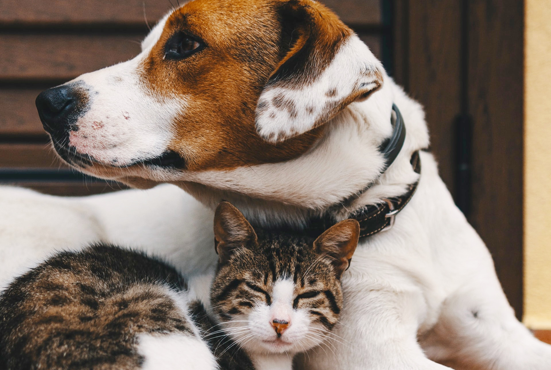 How to Choose the Best Pet Boarding Facility