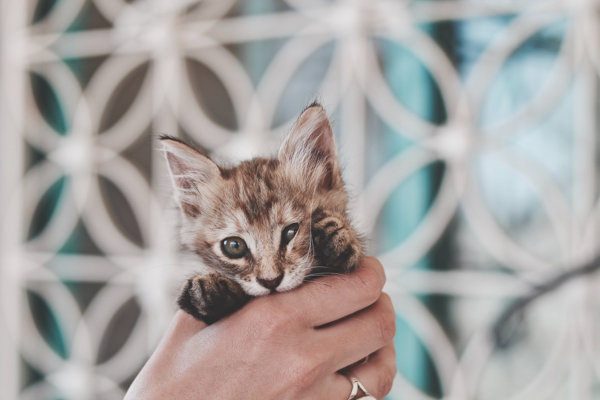 Kitten being held
